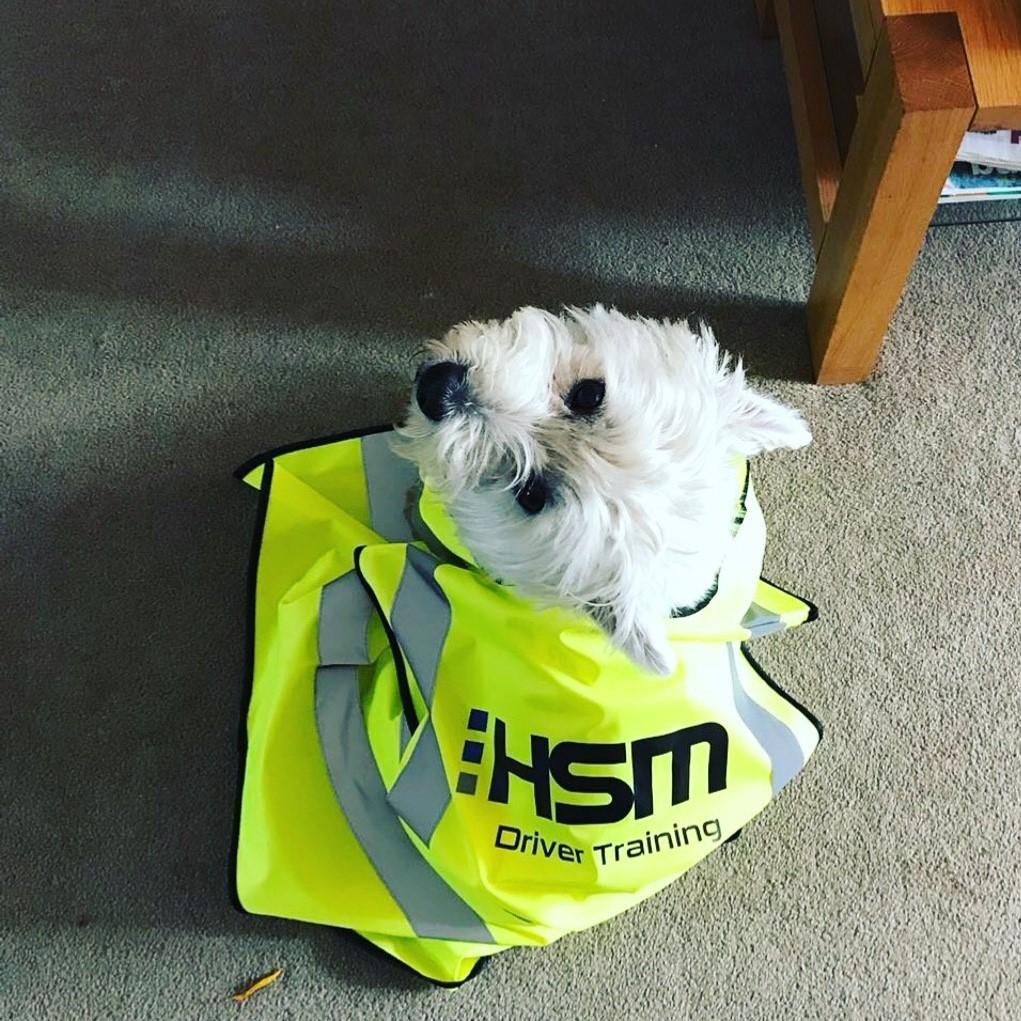 HSM driver training - Dog - Driving school hertfordshire